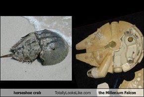 horseshoe crab Totally Looks Like the Millenium Falcon