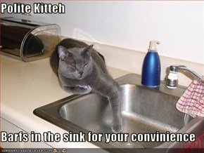 Polite Kitteh  Barfs in the sink for your convinience