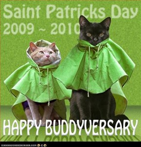 Happy Buddyversary Kittymac & Phil . . . . .