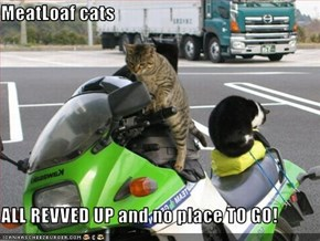 MeatLoaf cats  ALL REVVED UP and no place TO GO!