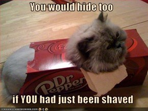 You would hide too    if YOU had just been shaved