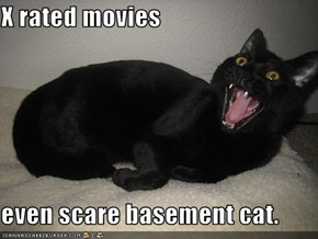 X rated movies  even scare basement cat.