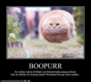 BOOPURR