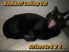 Kamikazi Ceiling Cat  strikes in 3, 2, 1 . . .