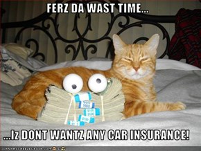 FERZ DA WAST TIME...  ...Iz DONT WANTZ ANY CAR INSURANCE!