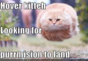 Hover kitteh Looking for purrmision to land