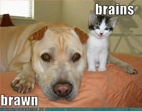 brains  brawn