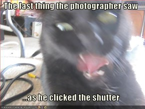 The last thing the photographer saw   ...as he clicked the shutter