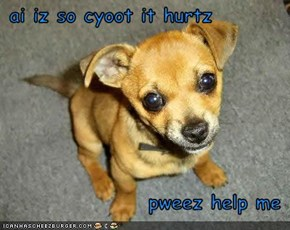 ai iz so cyoot it hurtz  pweez help me