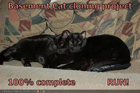 Basement Cat cloning project     100% complete             RUN!