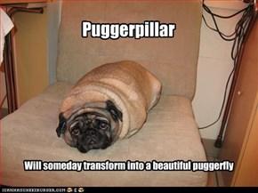 Puggerpillar