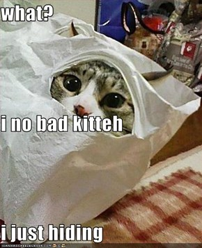 what? i no bad kitteh i just hiding
