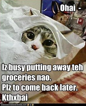 Iz busy putting away teh  groceries nao. Plz to come back later. Kthxbai