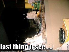 last thing u see.....