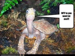 Rude Turtle