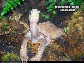 Loooooooooong Turtle