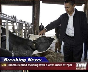 Breaking News - Obama is mind melding with a cow, more at 7pm