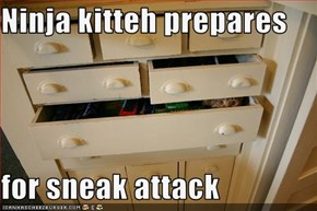 Ninja kitteh prepares  for sneak attack