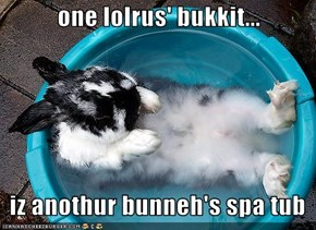 one lolrus' bukkit...     iz anothur bunneh's spa tub