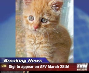 Breaking News -  Gigi to appear on AFV March 28th!