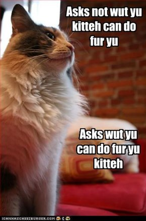 Asks not wut yu kitteh can do fur yu