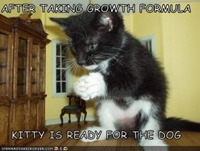 AFTER TAKING GROWTH FORMULA  KITTY IS READY FOR THE DOG