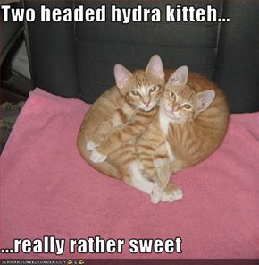 Two headed hydra kitteh...  ...really rather sweet