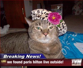 Breaking News! - we found paris hilton live outside!