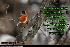 ....a sure sign Spring is on the way....?