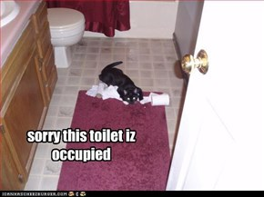 sorry this toilet iz occupied