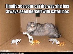 Finally see your cat the way she has always seen herself with safari box