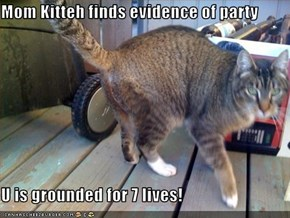 Mom Kitteh finds evidence of party  U is grounded for 7 lives!
