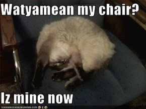 Watyamean my chair?  Iz mine now