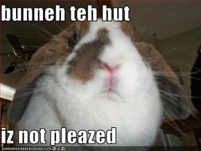 bunneh teh hut  iz not pleazed