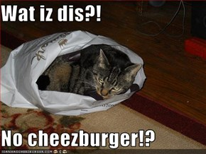 Wat iz dis?!  No cheezburger!?