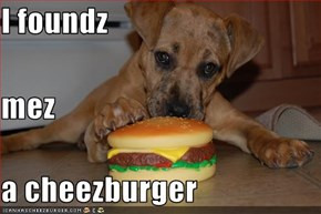 I foundz mez a cheezburger
