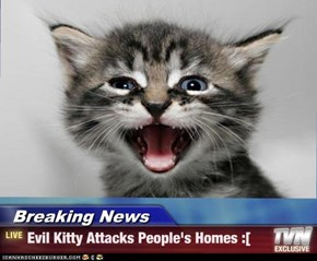 Breaking News - Evil Kitty Attacks People's Homes :[