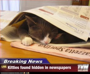 Breaking News - Kitties found hidden in newspapers
