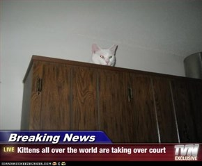 Breaking News - Kittens all over the world are taking over court