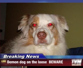 Breaking News - Demon dog on the loose  BEWARE
