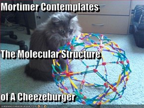 Mortimer Contemplates The Molecular Structure of A Cheezeburger