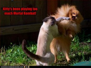Kitty's been playing too much Mortal Kombat!