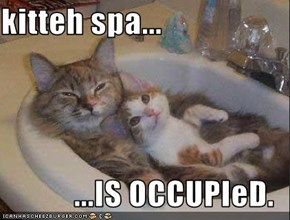 kitteh spa...  ...IS OCCUPIeD.