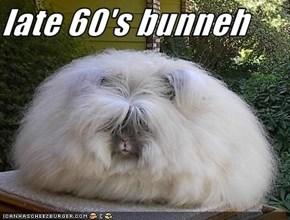 late 60's bunneh