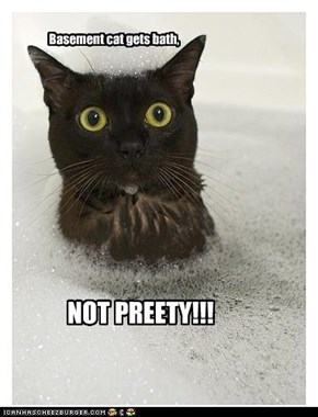 Basement cat gets bath,