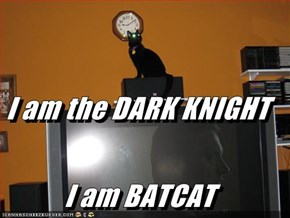 I am the DARK KNIGHT I am BATCAT