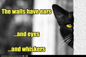 Our main weapon is ears, ears and eyes. Our two main weapons...