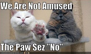 "We Are Not Amused  The Paw Sez ""No"""