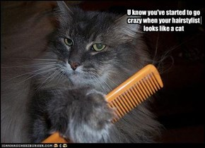 U know you've started to go crazy when your hairstylist  looks like a cat