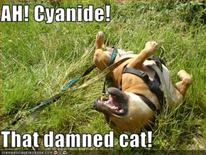 AH! Cyanide!  That damned cat!